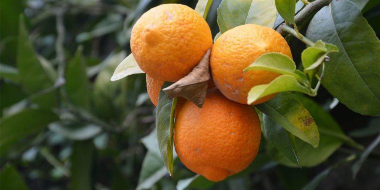 Le arance sono arancioni. Sono loro ad aver dato il nome al colore?