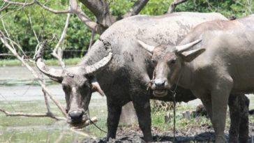 Delle bufale, nome con il quale spesso ci si riferisce a storie false o fake news