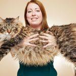 Il gatto più lungo al mondo