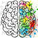I due emisferi del cervello