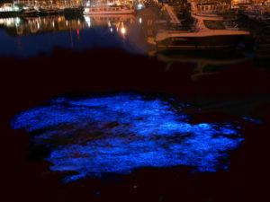 Bioluminescenza in mare di Noctiluca Scintillans.