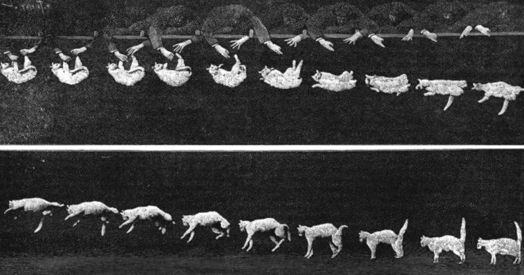 Sequenza fotografica della caduta di un gatto.