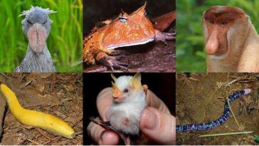 Animali strani, scimmie, rane e altro ancora