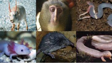 Sei animali davvero particolari.