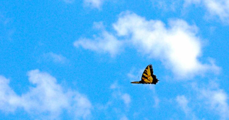Una farfalla che svolazza