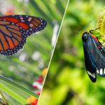 Foto natura farfalla e falena