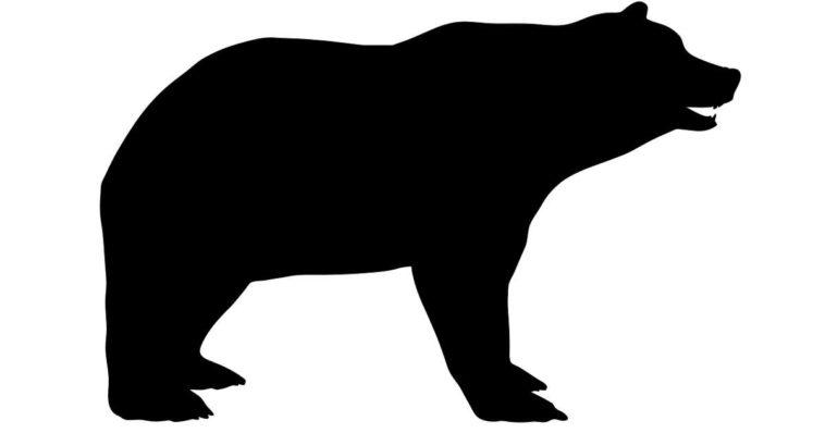 Sagoma nera di un orso su sfondo bianco