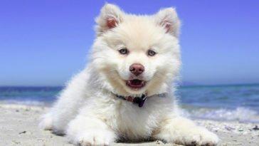 Un cane sulla spiaggia