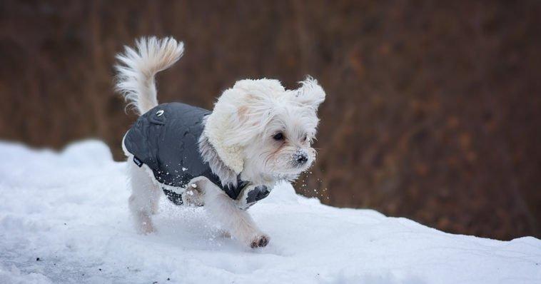 Cane con cappotto su neve