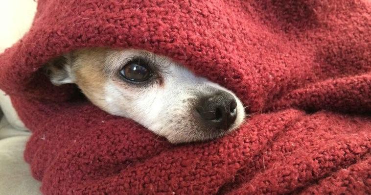 Quali Razze Di Cani Soffrono Il Freddo Domande Impossibili