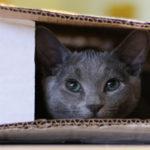 Un gatto in una scatola di cartone