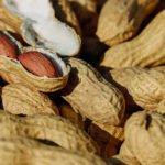 delle arachidi, frutta secca, dove crescono