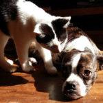 Cane appisolato viene svegliato da gatto che lo avvisa delle zanzare