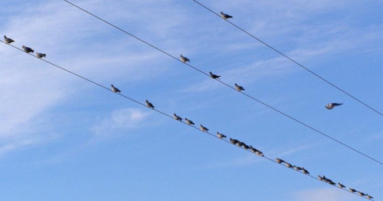 Degli uccelli appollaiati sui cavi dell'alta tensione.