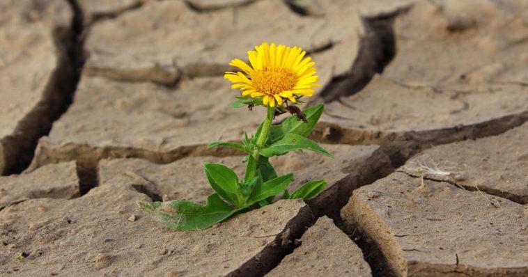 Fiore emerge tra l'asfalto e le rocce, metafora di resilienza